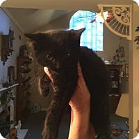 Adopt A Pet :: Mulberry Street - McDonough, GA