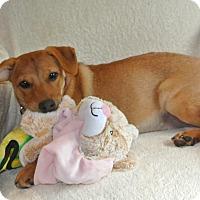 Adopt A Pet :: Karen - Surrey, BC