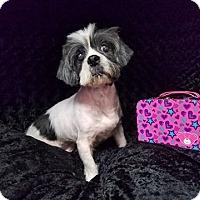 Adopt A Pet :: Nora Miami - Urbana, OH