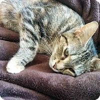 Adopt A Pet :: Parri - Gaithersburg, MD