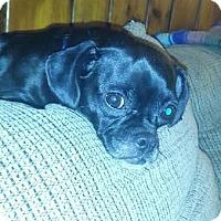 Adopt A Pet :: Moxie - China, MI