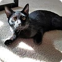 Adopt A Pet :: Wallace - Athens, GA