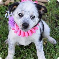 Adopt A Pet :: Valencia - Denver, CO
