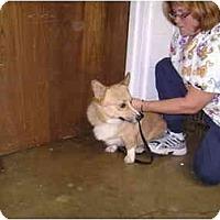 Adopt A Pet :: Jinx - Inola, OK
