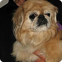 Adopt A Pet :: Lucky (in Chicago, IL) - Vansant, VA