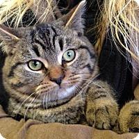 Adopt A Pet :: Wigden - Hamilton, ON