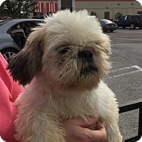 Adopt A Pet :: Peanut - St. Petersburg, FL