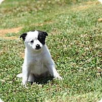Adopt A Pet :: kimberly - Groton, MA
