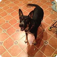 Adopt A Pet :: Ava - Portland, ME