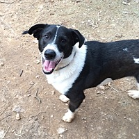 Adopt A Pet :: Zack - Acworth, GA