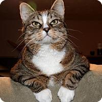 Adopt A Pet :: Annie - Salt Lake City, UT