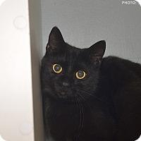 Adopt A Pet :: Minnie - Medina, OH