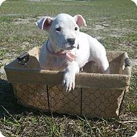 Adopt A Pet :: Bunny - Ocala, FL