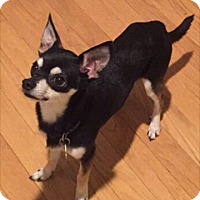 Adopt A Pet :: Peanut - New Oxford, PA