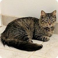 Adopt A Pet :: Tegan - Tampa, FL