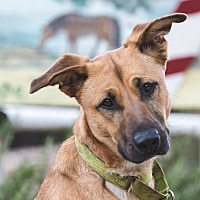Adopt A Pet :: Red - Lompoc, CA
