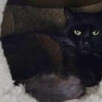 Adopt A Pet :: Juniper - New Milford, CT