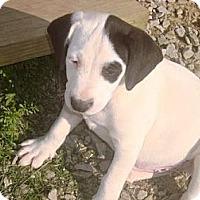 Adopt A Pet :: Hoss - Irvington, KY