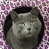 Adopt A Pet :: Edward - Maxwelton, WV