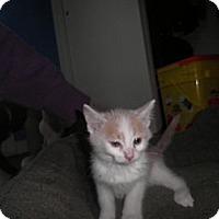 Adopt A Pet :: Kyla - Warren, MI