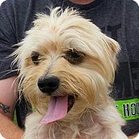 Adopt A Pet :: Cooper - Huntingburg, IN