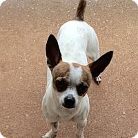 Adopt A Pet :: Bruiser - Edmond, OK