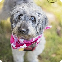 Adopt A Pet :: Carli - Kingwood, TX