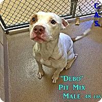 Adopt A Pet :: 2-9 Debo - Triadelphia, WV