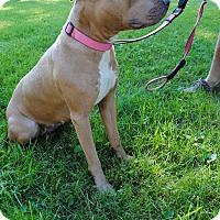 Adopt A Pet :: Peanut - Bay City, MI
