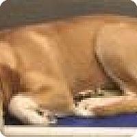 Adopt A Pet :: Chloe 4335 - Columbus, GA