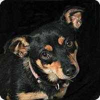 Adopt A Pet :: Luby Loo - Norwalk, CT