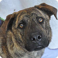 Adopt A Pet :: Hank - Atlanta, GA
