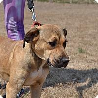Adopt A Pet :: Fareeha - Acworth, GA