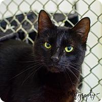 Adopt A Pet :: Theodore - Greenwood, SC