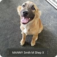 Adopt A Pet :: MANNY - Gustine, CA