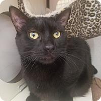 Adopt A Pet :: Kole - Warren, MI