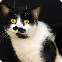 Adopt A Pet :: Mr. Beans - Newland, NC