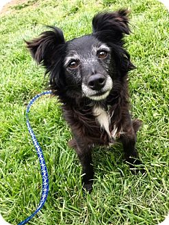 Chihuahua/Dachshund Mix Dog for adoption in Sparta, New Jersey - Ethel