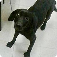 Adopt A Pet :: Birdie - Rexford, NY