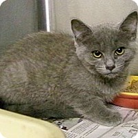 Adopt A Pet :: Sanford - Dover, OH