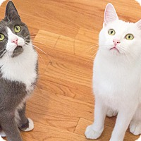 Adopt A Pet :: Sparky and Nika - Chicago, IL