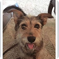 Adopt A Pet :: Peanut - Bedminster, NJ