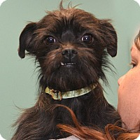 Adopt A Pet :: Lilah Jean - Rockford, IL