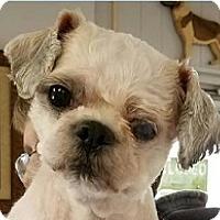 Adopt A Pet :: Timmy - Springdale, AR