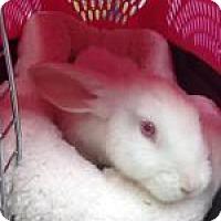 Adopt A Pet :: Leon - Tampa, FL