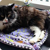 Adopt A Pet :: Anton - Portland, OR