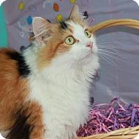 Adopt A Pet :: Farrah - Erwin, TN