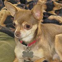 Adopt A Pet :: Taco - San Antonio, TX