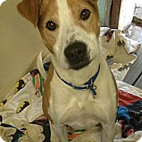 Adopt A Pet :: Buster (courtesy) - South Park, PA