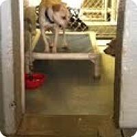 Adopt A Pet :: Tango - Athens, GA